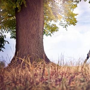 Strom šťastia
