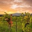 Západ á la vinič