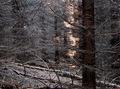 Trochu hustejší les