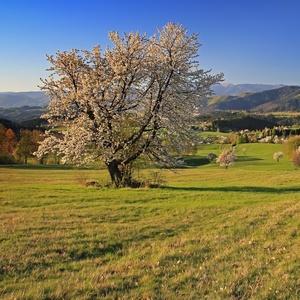 Jaro na Poľane