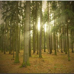 Skryté v stromoch