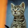 Mala cica...