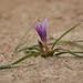Jar na Cypre