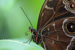 Zo sveta motýľov