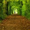 Zelený tunel...