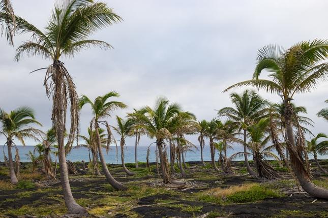 Palmy v strede oceanu