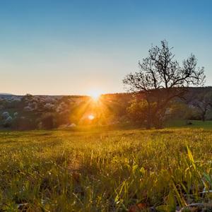 Západ slnka obyčajný