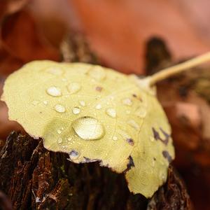 Jesenná kvapka