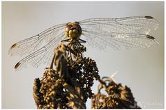 Potrhané krídla