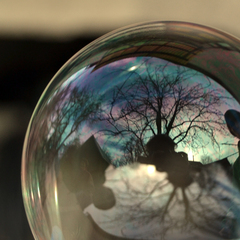 life in a bubble