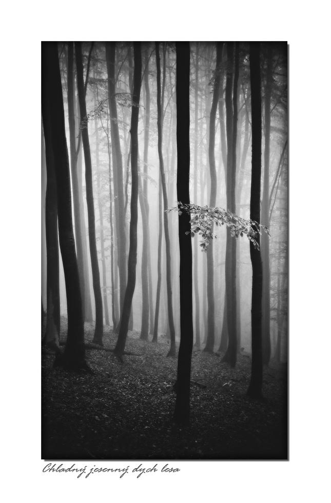 Chladný jesenný dych lesa
