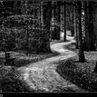 Cestička kľukatá