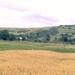 Dvojfarebné pole
