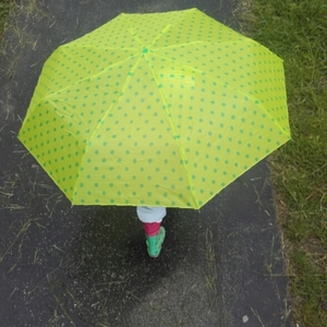Dážď-nik