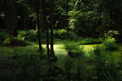 Bielovežský prales III