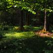 Bielovežský prales II