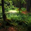 Bielovežský prales