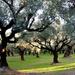 Olivovníkový ráj