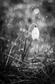 Osamelá v daždi