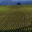 polja