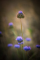 kvetiny z lúky