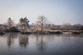 zamrznuté ráno III
