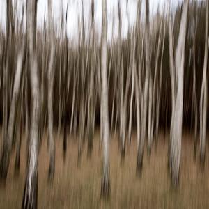 brezový háj