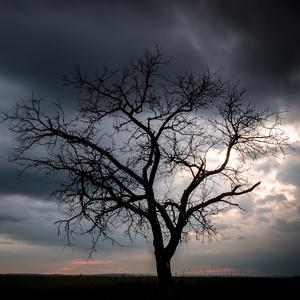 stromovka II