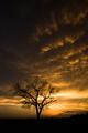 stromovka