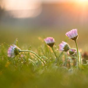medzi nami kvetinami