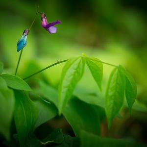 lesna kvetina