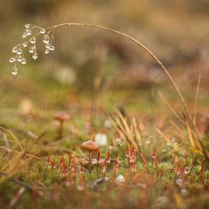 pod steblom trávy
