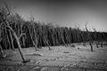 mrtvy les