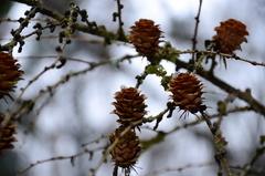 zimná flóra