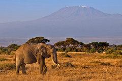Zivot pod Kilimandzarom