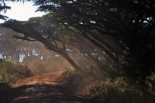 Caro rana v Ngorongoro