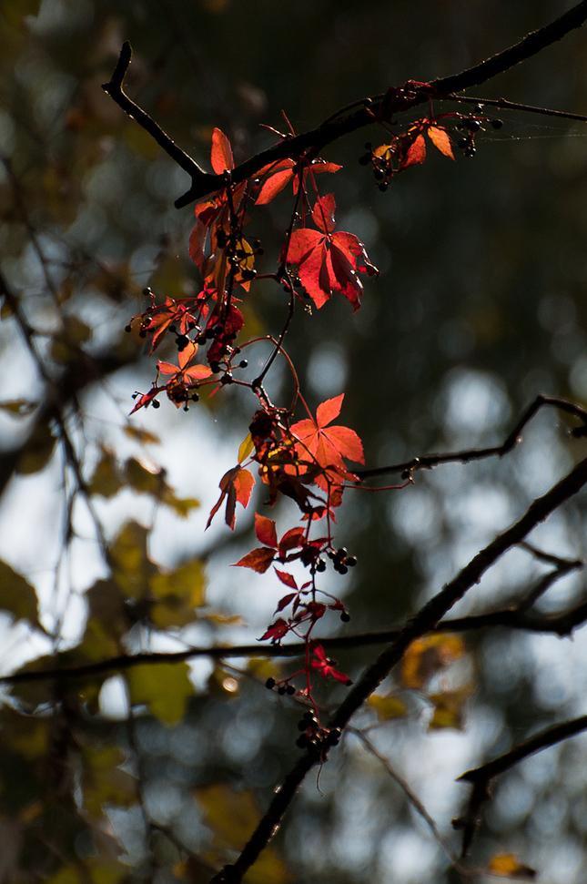 Jesenná