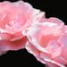 Ako z kvetu makového