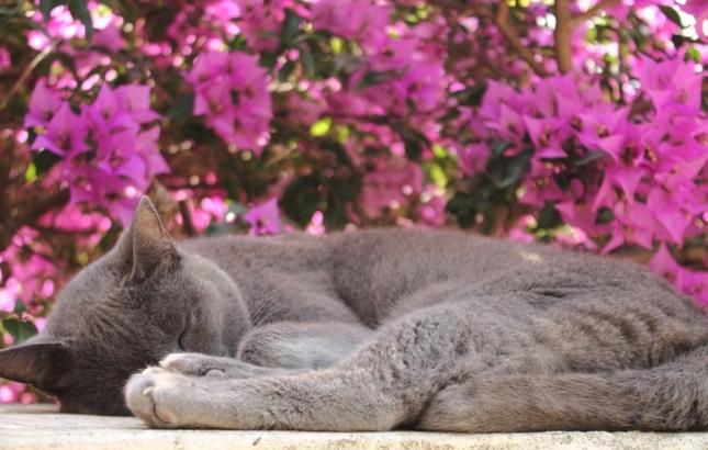 Mačka v Ravelle