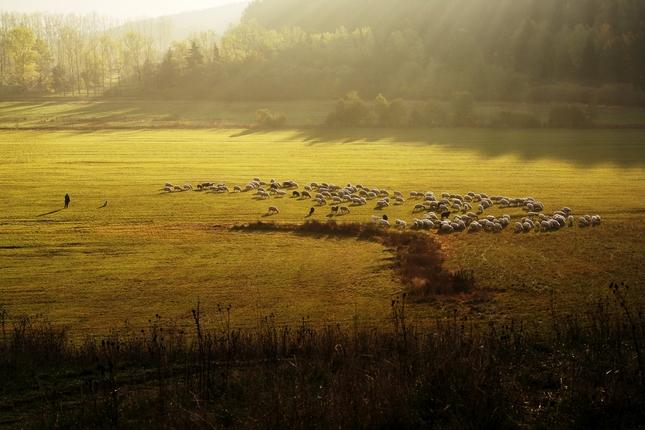 Dobré ráno ovečky ...