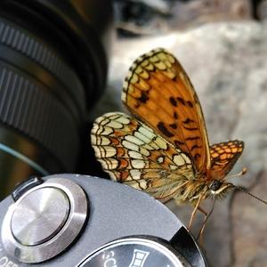 Motýľ fotograf