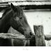 Horse's Life