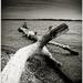 Ashore I