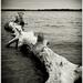 Ashore II