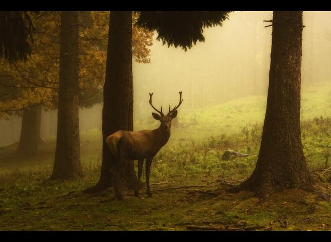 Rakúsky bambi? :-)