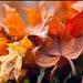 Jesenný pokoj I.