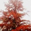 Lístie stromu
