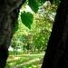 2 stromy