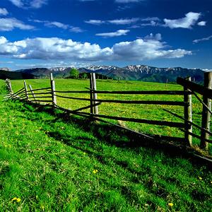 Staré ploty
