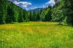 Leto v doline Selenec